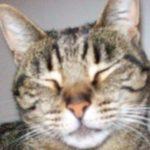 Front Seat Cat
