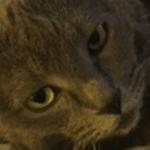 Gossamer Cat